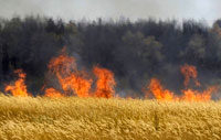 Wildfires and Russian Bureaucracy: Perfect Combination