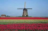 Holland: A Little Narco-state ruled by Fascists