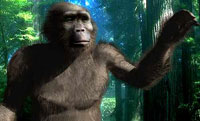 Ancient hominid sex found very similar to that of modern gorillas
