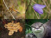 Biodiversity: Red Alert