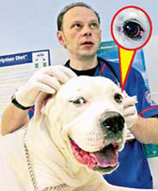 dog with a human eye