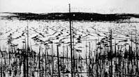 Tunguska meteorite produced most powerful blast on Earth in 20th century