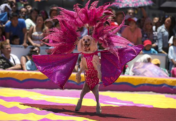 Mexican circuses left without animals. Circus