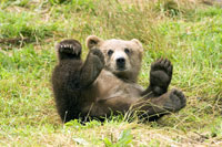Six tourists kill 2-year-old bear in self-defense