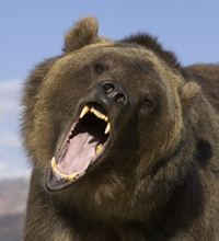 Bear attacks man in US park and lacerates his face