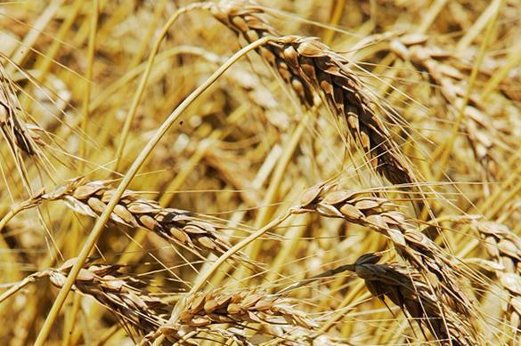 Russia must take off the strait-jacket of the WTO to feed 500 mln people. Russia can feed millions