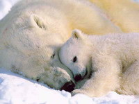 Inspectors investigate 3 polar bear deaths at Buffalo Zoo