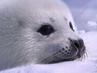 Baby seal found inland in Britain returned to sea