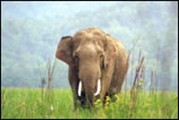 Four wild elephants electrocuted in India