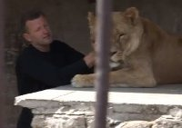 Man lives in cage with lions for 35 days. 45324.jpeg