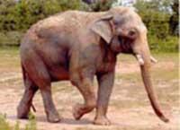 Elephant kills British man on honeymoon