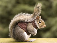 Suicidal Squirrels shock Romanian authoriries
