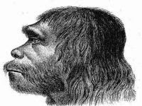 Investigation reveals that Neanderthals died out earlier than thought. 49339.jpeg