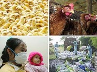 Bird flu spreads in Ghana