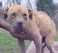 Arizona man sentenced to year in prison for animal cruelty