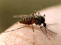 US authorities begin hunting for dead birds infected with West Nile virus