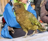 Python kills 3 rare parrots in Budapest Zoo