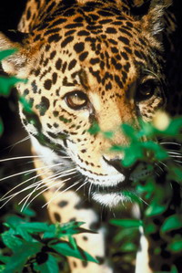 Wildlife trade conference brings results in wildlife protection