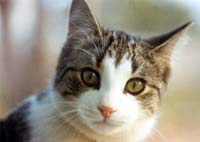 Bird flu found in two more cats on island of Ruegen in north Germany