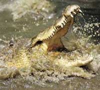 Taiwanese zoo worker has armed reattached after crocodile attack