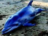USA: Over 100 Sea Animals Washed Up Dead