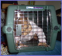 Couple locks up 2 sons in dog cage