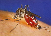 Infected with West Nile virus may never recover