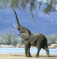 Los Angeles' oldest elephant to retire in elephant sanctuary