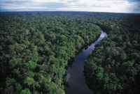 New legislation can lead to deforestation of Amazon rainforest