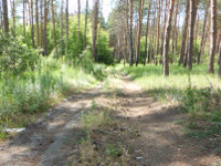 Ulyanovsk region takes the lead on conservation of nature. 52433.jpeg