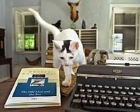 Ernest Hemingway's multi-toed cats roam his home and cause controversy