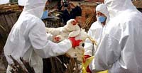 Vietnam confirms first bird flu outbreak among poultry in a year