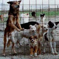 Indian authorities cull 200 stray dogs