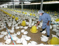 Bird flu oozes out into China