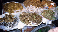 Boiled ants and locusts make healthiest and most nutritious food on Earth