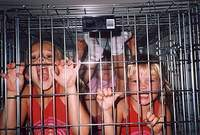Adoptive parents on trial for confining their 11 children in cages and boxes