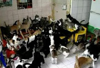 Elderly Woman Lives Happily with 117 Cats in One Room