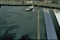 Diesel spill threatens killer whale habitat