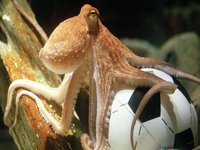 FIFA 2018, Common Sense, the Silly Season and the X Factor of Paul the Octopus