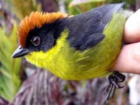 New bird discovered in Columbian mountain