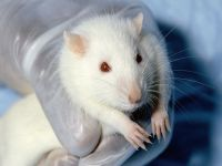 China: Campaign begins to end cosmetics animal testing. 50484.jpeg