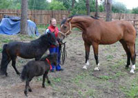 World's smallest horse born in Yekaterinburg