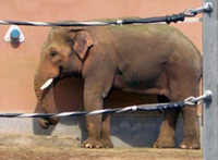 Elephant kills handler in Moscow zoo
