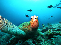 Endangered biodiversity, endangered people
