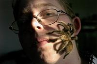 Spiders inhabit boy's ear