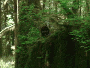 Canadian Researcher Snaps Sasquatch in Vancouver