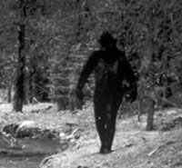Bigfoot Appeared after Experiments to Cross Apes with Humans