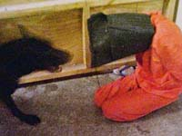 'Real cartoons' of Abu Ghraib tortures infuriate US administration