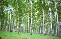 Mutant forests to be planted in Russia