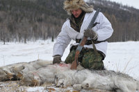 Pack of wolves kills 10-year-old child in Siberia. 49530.jpeg